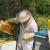 Bagremov med je jedini pH neutralan i pogodan za dijabetičare