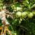 Da li lišajevi štete ili koriste biljkama?