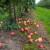 Voće i povrće trune u voćnjacima i na njivama - zbog Bregzita nema ko da ih obere