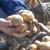 Žrtva novog zatvaranja opet je i poljoprivreda - kamo s mesom, krumpirom, vinom?