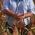 I u veljači rast cijena hrane - prvi na listi šećer, biljna ulja i sirak