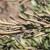 """Najopasnija biljna bakterija: Na vidiku rješenje problema zvanog """"ubojica maslina"""""""
