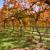 Gnojidba najvažniji zahvat u jesen kod voćnjaka i vinograda