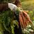 Povrćarski radovi u studenom - sijanje, sadnja, čišćenje i priprema vrta za zimu
