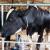 Plenković: Otkupit ćemo od malih mljekara sav tržišni višak