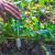 Azijsko povrće možete uzgojiti i u svom vrtu - ne zahtijeva posebnu njegu