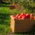 Dijaspora dala potporu 11 kompanija iz agrobiznisa