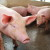 Vladimir Margeta: Da svinja od zraka živi, cijena bi joj morala biti veća nego je danas