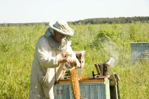 Koje uslove treba ispuniti za organsku proizvodnju meda?