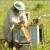 Američka trulež - uzgoj jakih pčelinjih zajednica najbolja je preventiva