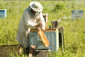 Uzgoj jakih pčelinjih zajednica - najbolja je preventiva