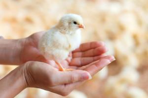 Isplaćeno je gotovo 27 milijuna kuna za Mjeru 14 - Dobrobit životinja