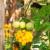 Napravite svoje kombinacije povrća koje će otjerati štetočine i pospješiti rast usjeva