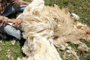 Zatvorili ekološki krug uzgoja ovaca, Josip proizvodi sir, Jasminka vunu pretvara u suvenire