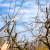 Kada je pravo vrijeme za rezidbu voćki i kako se ona obavlja?