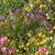 Divlje cveće: Rešenje za pčele, sušu, kvalitet zemljišta, ali i poljoprivrednike