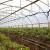 Mjera 4: Nove prilike za proširenje povrtlarske, voćarske  i vinogradarske proizvodnje