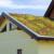 Zeleni krovovi dugoročno isplativiji - na njima moguć uzgoj ljekovitog bilja