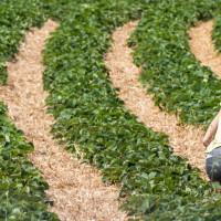 Pozvali frizere, konobare i sve nezaposlene da posao nađu u poljoprivredi