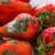 U kojim uslovima se najčešće javlja siva trulež jagode i kako je suzbiti?