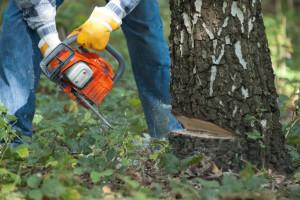 Nova šumarska strategija: Potpore vlasnicima, otpornost i rješavanje ilegalne sječe