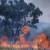 Pale pašnjake da bi sprečili širenje požara
