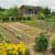 Dobri susjedski odnosi biljaka donose bolji prinos - kako ih uklopiti?