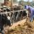 Oko 15 hiljada mljekara na udaru vrtoglavog rasta cijena stočne hrane