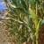 InoBioTeh: Kako do većih prinosa uz manje pesticida i gnojiva?