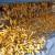 Direkcija za robne rezerve kupuje do 8.324.000 kg merkantilnog kukuruza