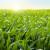 Suzbijte efikasno korove u kukuruzu nakon nicanja