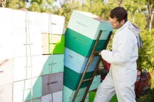 Kako pripremiti košnice za selidbu i transport?