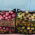 Čuvanje plodova jabuke i kruške - ostavite im i poneki list