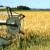 Počela žetva ječma: U Bečeju prinosi i do 8,8 tona po hektaru