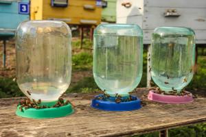 Pčele također trebaju vodu: Osigurajte im pojilice blizu košnice