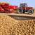 Tisuće tona bugarskog krumpira trune u skladištima i na poljima zbog jeftinog uvoza