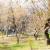 U Parizu završena sadnja javnog voćnjaka na 800 četvornih metara