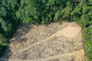Stručnjaci upozoravaju: Novi virus mogao bi da dođe iz Amazonije