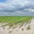 Objavljen 8. natječaj za obnovu poljoprivrednog zemljišta i proizvodnog potencijala!