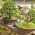 Ljubav prema bonsaiju pretvorio u biznis - cijena im ide do 100 KM