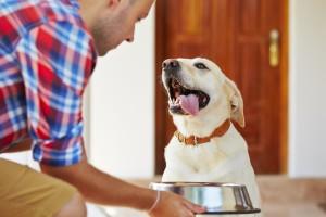 Koji začini su dozvoljeni u ishrani pasa?