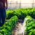 Svaka zemlja sama donosi odluku koji će pesticid zabraniti, bez obzira na pravila EU?