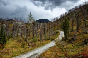 Sve češći požari u šumama - Šta možemo učiniti za prirodu?