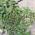 Portulak ili tušt se često smatra korovom, ali to je hranjiva biljka koja se lako uzgaja