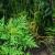 Ambrozija: Invazivna, neuništiva, opasna za uzgajane kulture i ljude, ali i ljekovita?