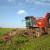 Moraju uništiti 5.000 ha šećerne repe zbog greške dobavljača pesticida