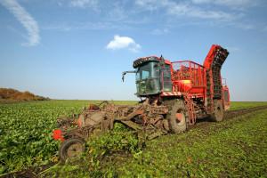 Što donosi program potpore za proizvođače šećerne repe?