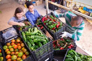 Pala evropska proizvodnja povrća?