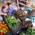 Pala europska proizvodnja povrća?