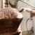 Tri načina temeljitog čišćenja kotla za pečenje rakije